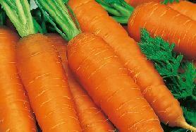 Выращивание моркови. Секреты богатого урожая