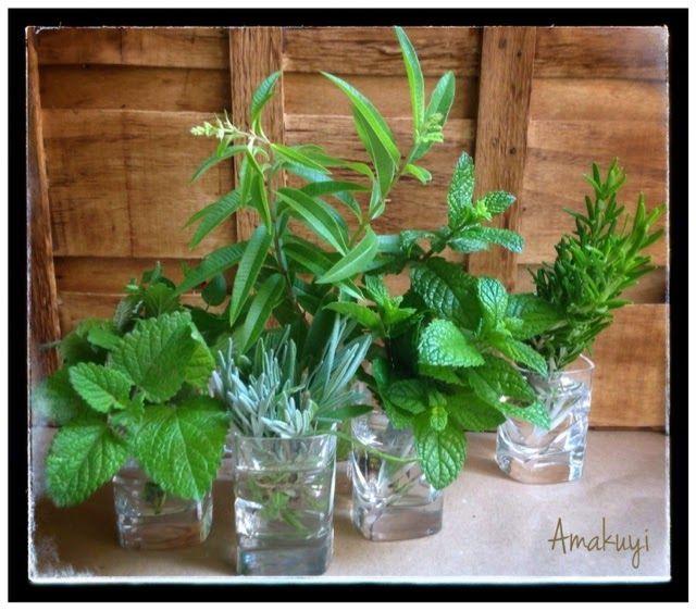 Mejores 108 im genes de jardineria en pinterest for Jardineria navarro