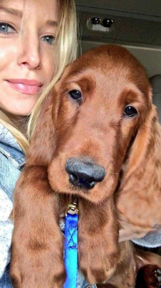 Amy and Gus! Dale Jr 's new Irish Setter has arrived!!! (3 ...