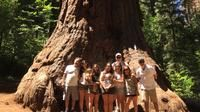 Off-Road Giant Sequoia 4x4 Tour: Book your tickets online for Off-Road Giant Sequoia 4x4 Tour. See reviews, photos, best Prices & Deals, attraction covered, timing with TripHobo Guaranteed!!!