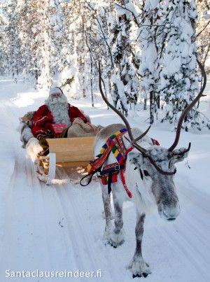 Le Père Noël avec son renne à Rovaniemi, en Laponie