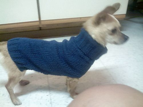 Free Easy Knitting Patterns For Medium Dog Jumpers : Dog Sweaters Patterns