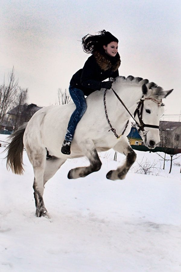 Byelorussian Harness Horse. Such a fun photo!