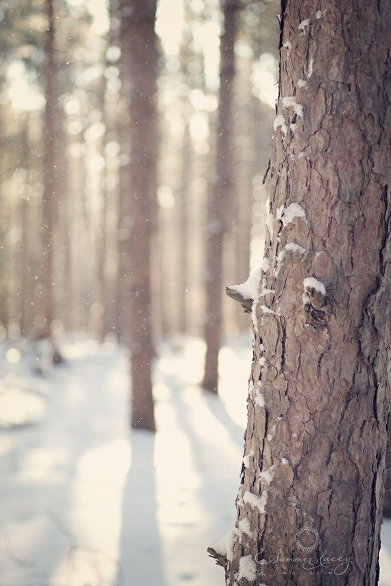 Whispers of Winter - Fine Art - 8x10  - Snow in the Woods - Snow Falling on a Winter Day - Original Wall Art Print