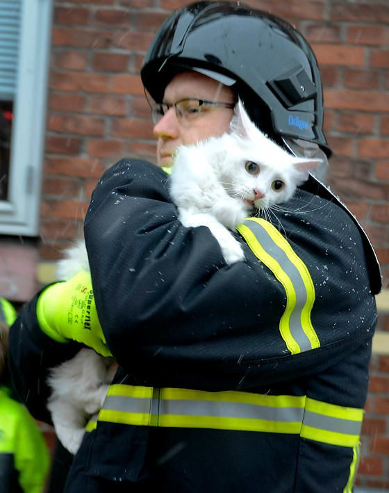A fire broke out in an apartment earlier this week in Aabenraa, Denmark. Some of those who needed rescue were animals. Firefighters rushed to the scene and pulled out terrified furry ones from the building.