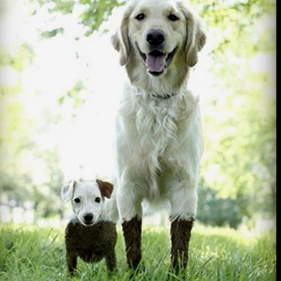 muddy.. This is adorable