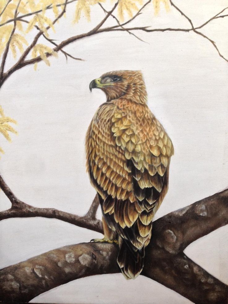 Autumn Eagle by Dawn Du Preez  Available on http://sherrynssecret.com/index.php?route=product/category&path=126