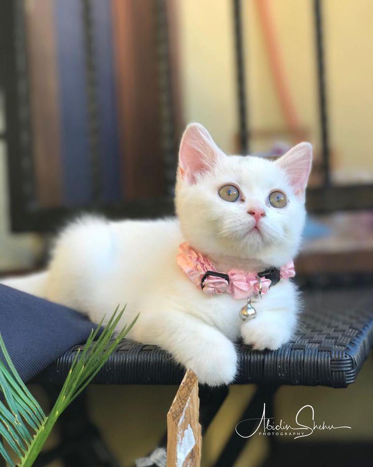 Mia... #cat #catsofinstagram #catlovers