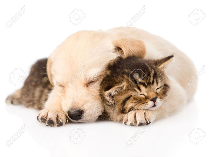 Puppy And Kitten Sleeping Google Search