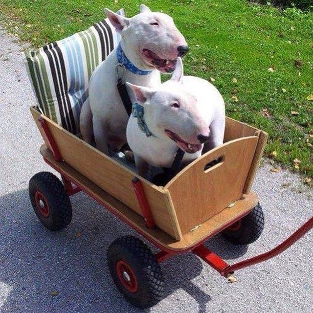 a little wagon built for two
