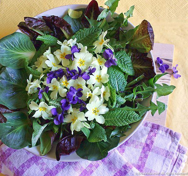 La nostra insalata domenicale: primule, violette, tarassaco, cicorini selvatici - http://www.erbaviola.com/2013/04/14/insalata-di-primule-viole-e-cicorini-selvatici.htm