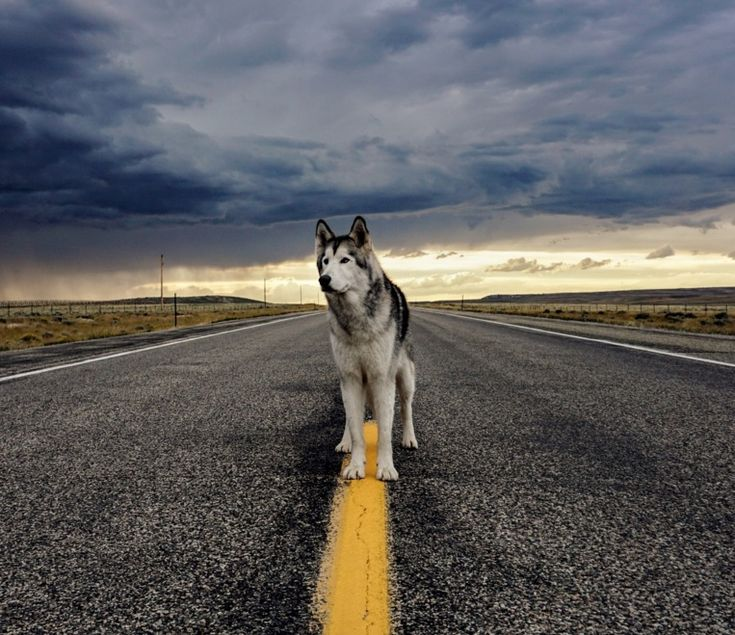 Qual a maneira mais fácil de inspirar outras pessoas a viajar acompanhados de seus cães? Para o norte-americano Kelly Lund foi registrar os momentos que passa ao lado de Loki, um mix de husky, lobo do ártico e malamute. Saiba mais...                                                                                                                                                                                 Mais