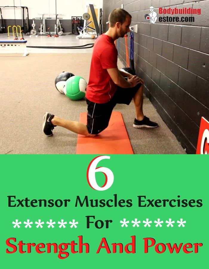 6 Extensor Muscles Exercises For Strength And Power
