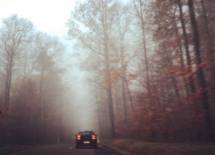 Foggy forest  #nature#naturephotography#naturelover#naturelove#landscapephotography#landscape#landscapelovers#landscaper#landscapelover#landscapehunter#photography#photographer#photoshoot#photo#photographyart#forest#autumn#cold#foggy#mornings#like#this#love#it @canon_photos @canondeutschland @heilbronn.erleben @heilbronnerland