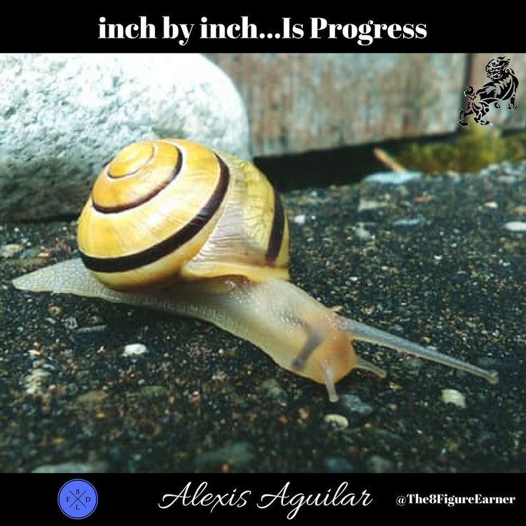 Inch By Inch - Is Progress  Click Link In Bio