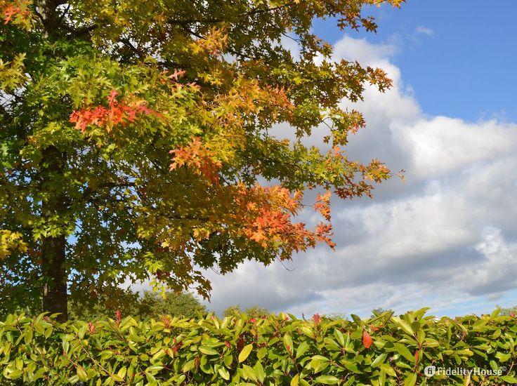 Contribuisce il cielo azzurro a dare colori di vita ad ogni pianta.
