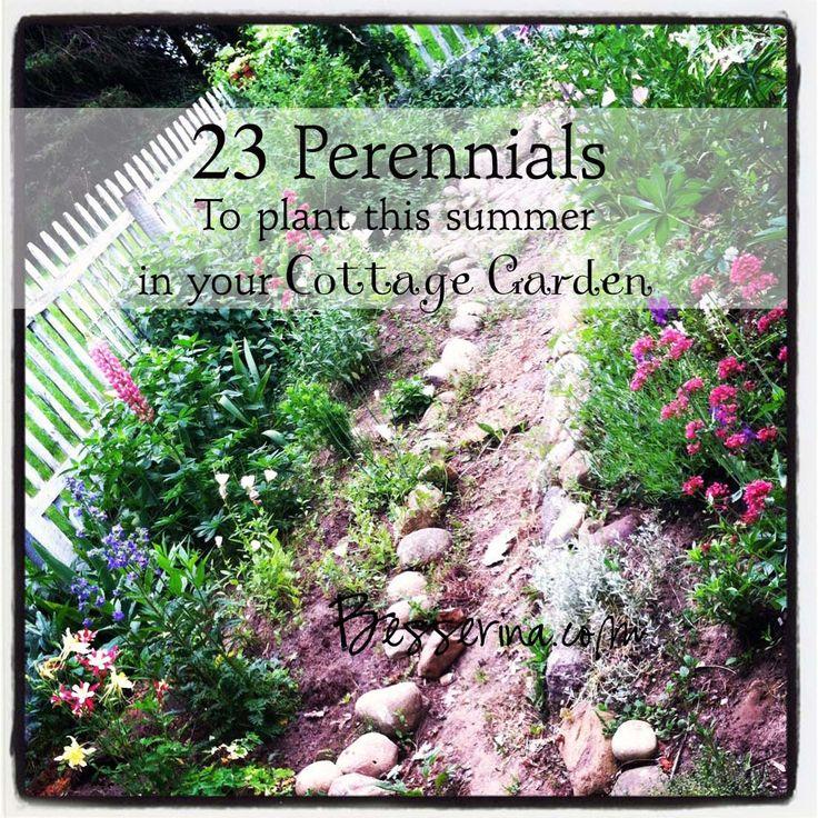 landscaping perennials | 23 Perennials to plant this summer in your garden