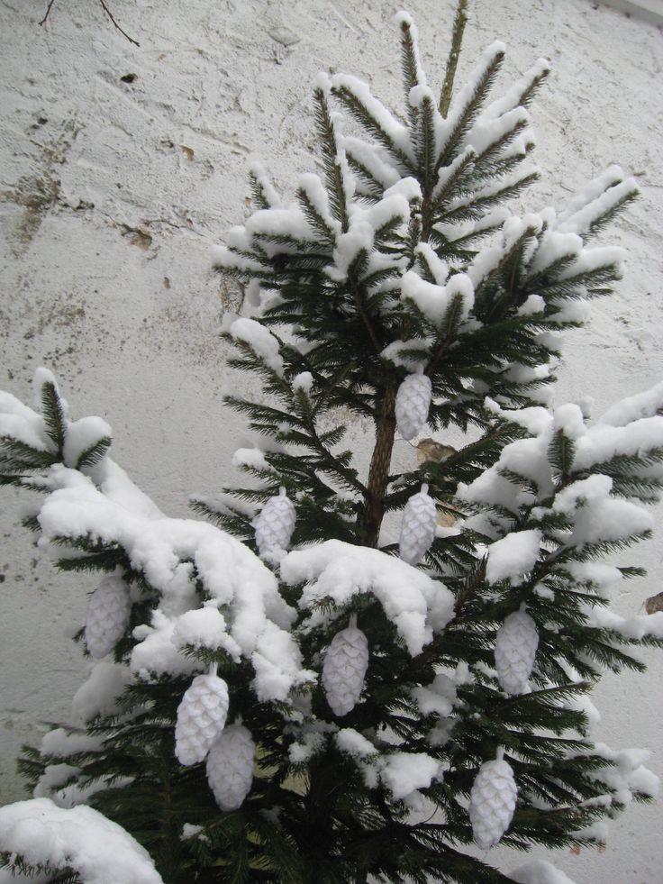 Šišky a sníh
