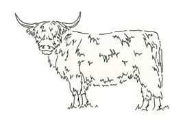 Crafty Stamps -  Highland cow  - SC130HF