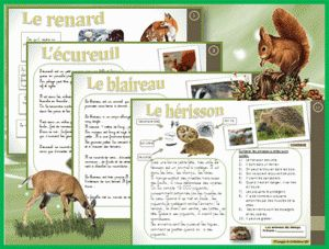 LECTURE : ATELIER en AUTONOMIE – Les animaux de la forêt et des champs
