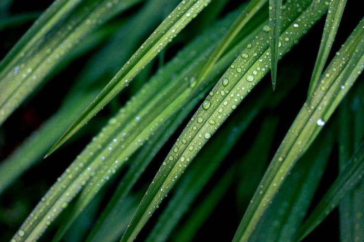 Natural teardrops   by Siniirr