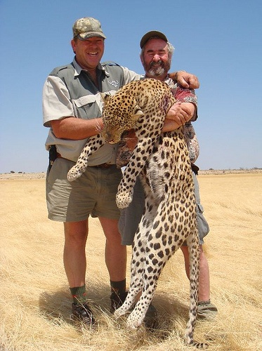 #Hunting leopard in Namibia Please repin!...YES REPIN SO EVERYONE CAN SEE WHAT POS THEY ARE.!!