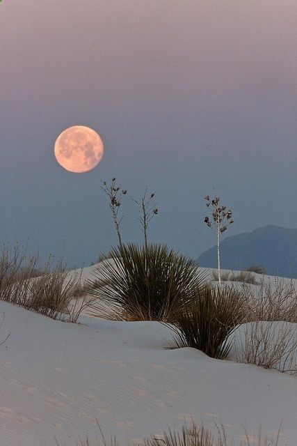 white sands, new mexico. Pink Moon