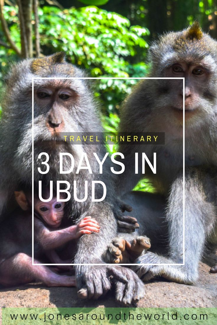 3 Days in Ubud, Bali!  THe best travel itinerary   #Ubud #Bali #Travel #Itinerary