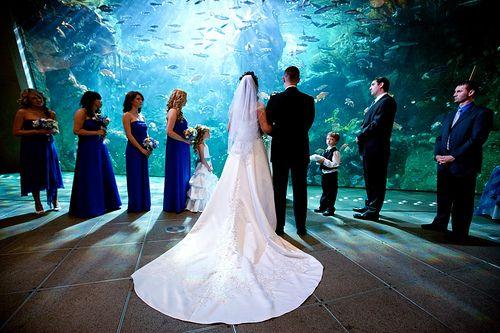 Atlanta Aquarium Wedding Cost Tbrb Info