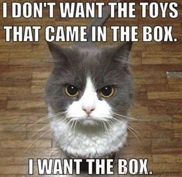 I dont want the toys Animals cat meme humor lol