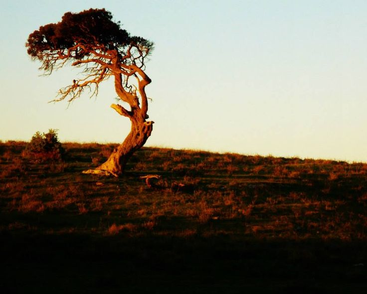 One old tree stands alone