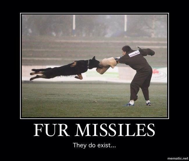 Fur Missiles #k9 #police  thats one heck of a shot boy thats awesome and intense!