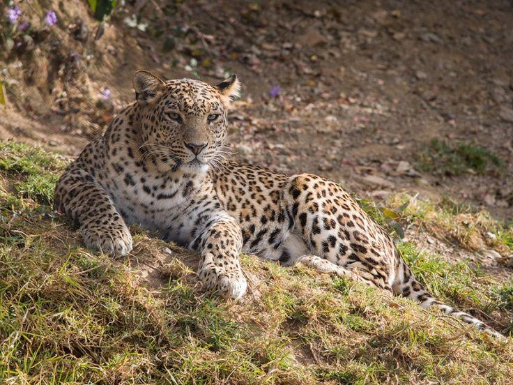 Nandhaur Wildlife Sanctuary - in Uttarakhand, India