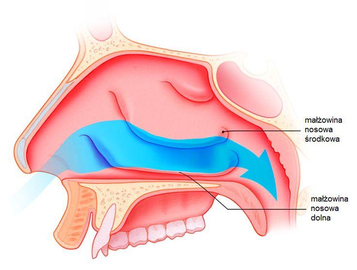 Polipy nosa, niedrożność nosa, krzywa przegroda nosa, przerost małżowin