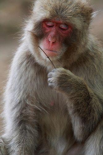 What do you think of ? Arashiyama monkey park Japan