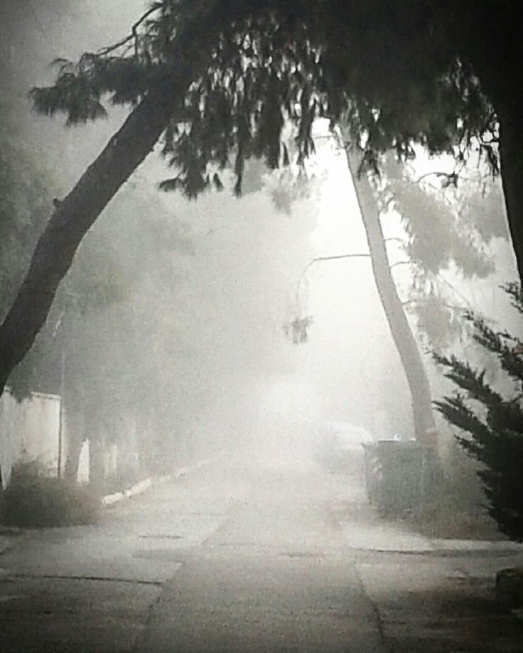 The mist♥