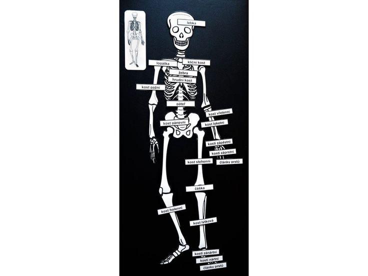 Kostra. Puzzle. 90 cm. Názvy kostí.