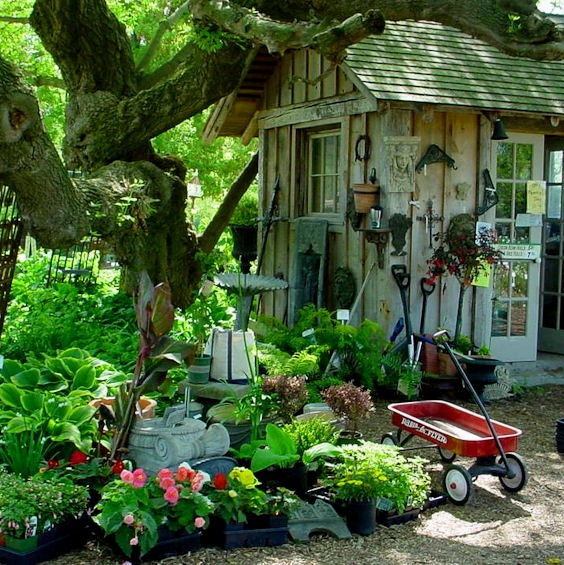Best Garden Under Trees Images On Pinterest Garden Ideas