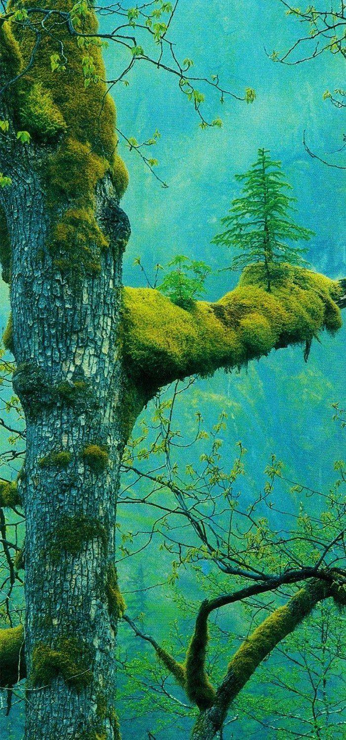 Les arbres sont des vrais durs cuire et ces 20 photos vont vous le prouver