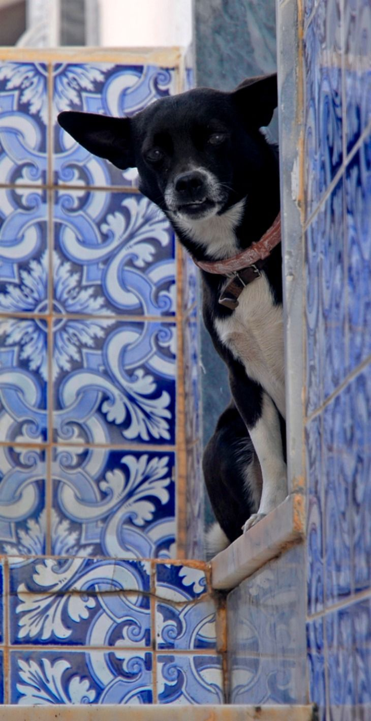 Portugal - Algarve - Lagos Square dog