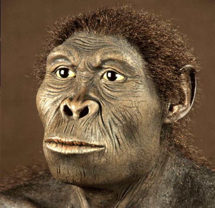 Homo Habilis es el primer representante del género Homo (el nuestro). Habilis no era muy diferente del Australopithecus Africanus, tenía una capacidad craneal media de unos 600 centímetros cúbicos y era quizá un poco más pequeño que los Australopithecus y que sus contemporáneos del género Paranthropus.  Los restos fósiles encontrados por el matrimonio Leakey, en 1959, en las gargantas de Olduvai (Tanzania) revelan que eran individuos de unos 140 cm de altura.