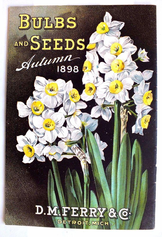 Rare*1898 D.M. Ferry* Bulbs&Seeds*Original Catalog*Victorian*Daffodils*Flowers #DMFerryCo