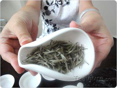 silver needle tea's appearance.  Very healthy