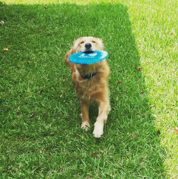 Let's play frisbee! - Mandeville Lakefront - Mandeville, LA - Angus Off-Leash #dogs #puppies #cutedogs #dogparks #mandeville #louisiana #angusoffleash