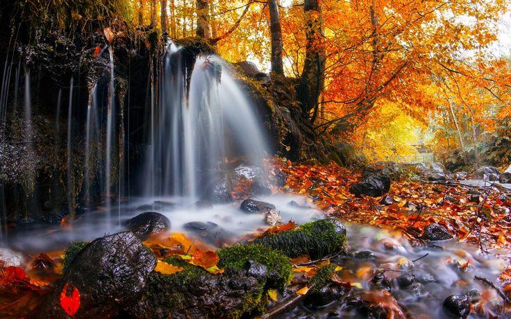 nature, Landscape, Waterfall, Trees, Leaves, Fall, Moss, Romania Wallpaper