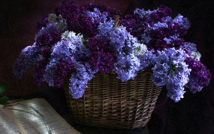 Lilacs.Favorite Things, Beautiful Baskets, Blue Dilly, Poses Purple, Beautiful Reading, Things Purple, Royal Colors, Purple Haze, Lavander Blue