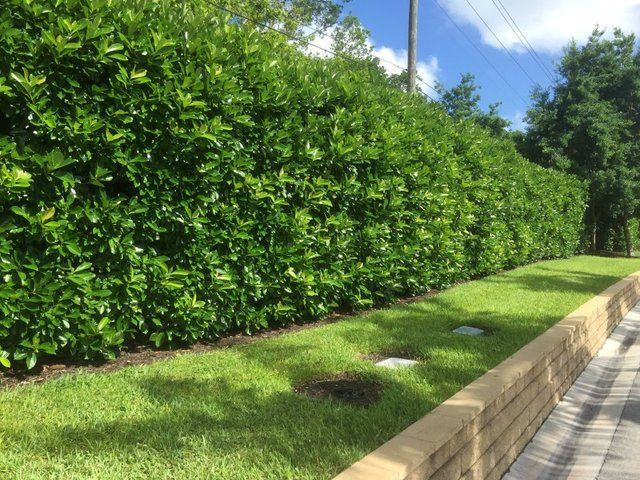 Shade Fence Landscaping