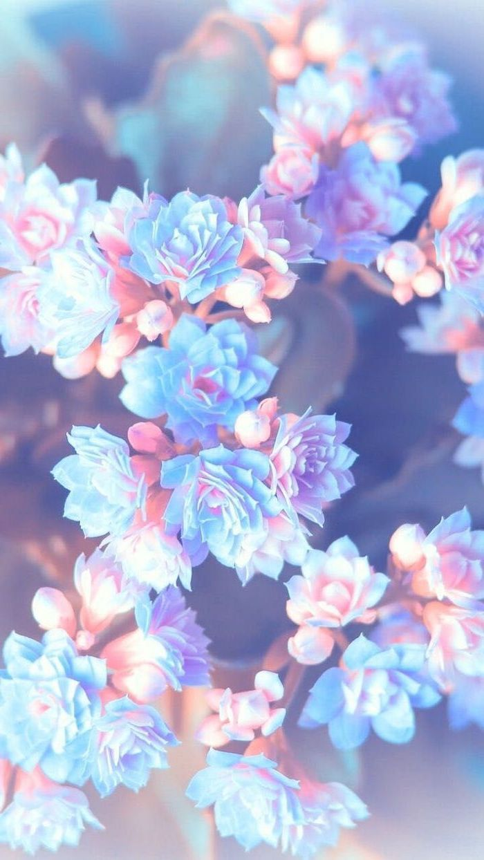Color azul pastel photograph by hazed aesthetic backgrounds, blue and white, blue aesthetic pastel. purple pink and blue flowers, blurred background, floral