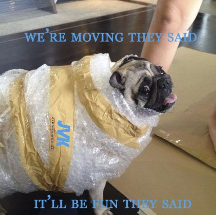Packing our lovely pets is one of the hardest parts, isn't it?   #jvkmovers #jvkvietnam #expat #relocation #expatvietnam #moving #international #transportation #movingcompany