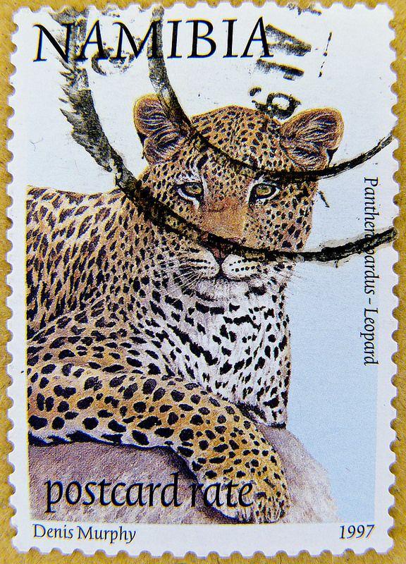 wonderful stamp Namibia postcard rate Leopard (panthera pardus)